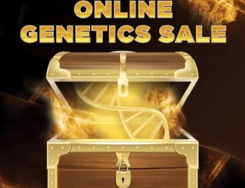 2020 Online Genetics Sale Report
